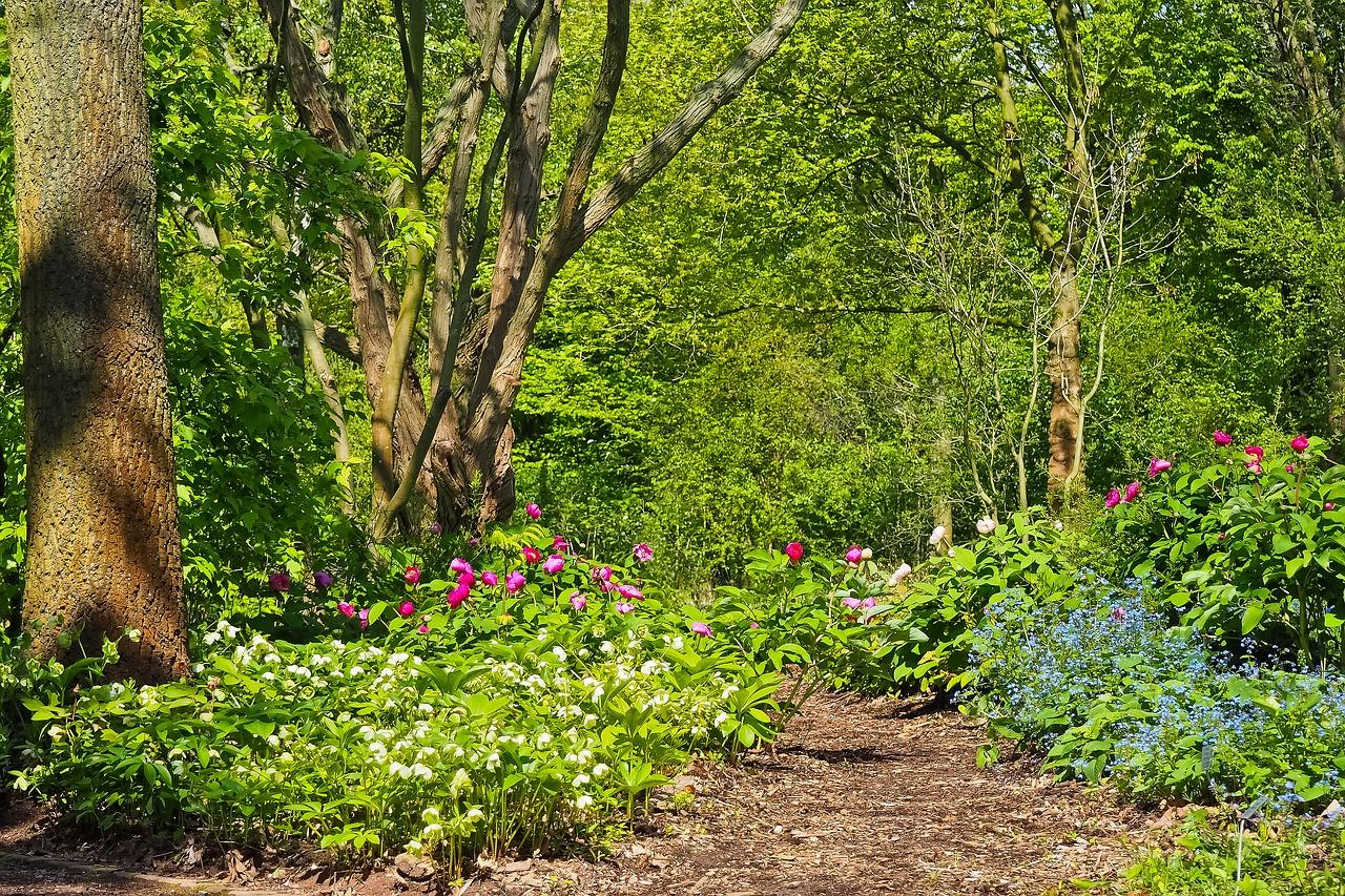 Blog Kwiaty Ogrodowe Ktore Lubia Cien Internetowy Sklep Ogrodniczy Podkarpackie Sady